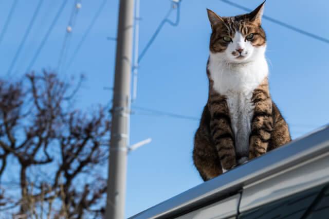 Google先生! 猫が…猫が……。なんか間違ってるんですが………。