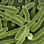 細菌戦争が家の中で起きてマジで詰んだ 〜地獄の育児録〜