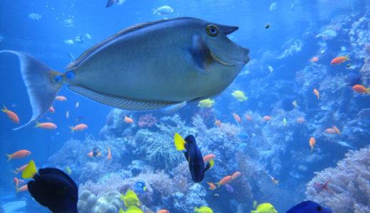 海の中にある弱肉強食の世界をシュールに感じられる『ACE OF SEAFOOD』。お前は海老か? 鮭か?