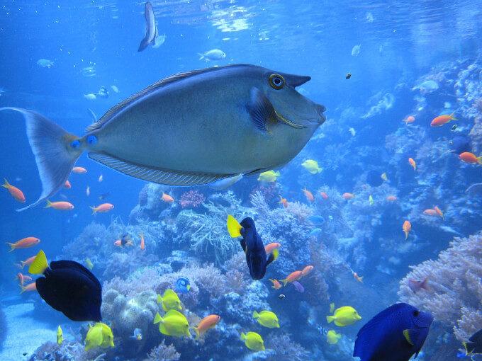「海の中」の画像検索結果